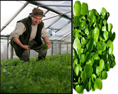 Peter Jones - Growing Watercress